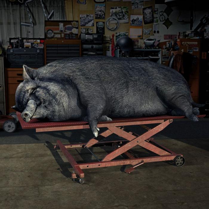 STA-BIL Hog